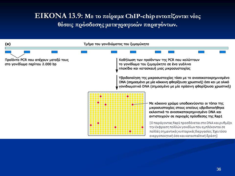 ΕΙΚΟΝΑ 13.9: Με το πείραμα ChIP-chip εντοπίζονται νέες θέσεις πρόσδεσης μεταγραφικών παραγόντων.