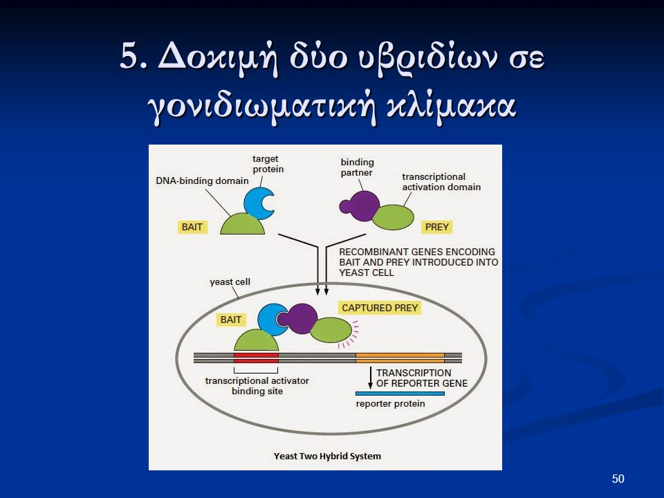 5. Δοκιμή δύο υβριδίων σε γονιδιωματική κλίμακα