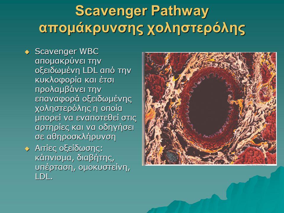 Scavenger Pathway απομάκρυνσης χοληστερόλης