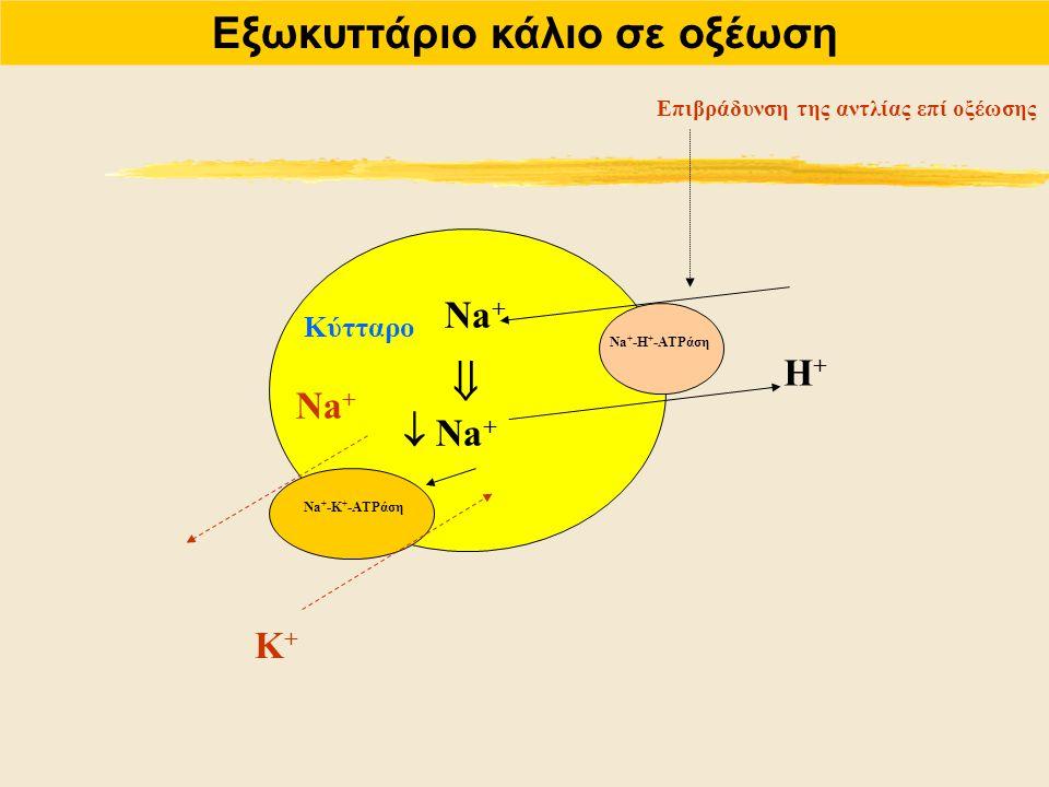 Εξωκυττάριο κάλιο σε οξέωση