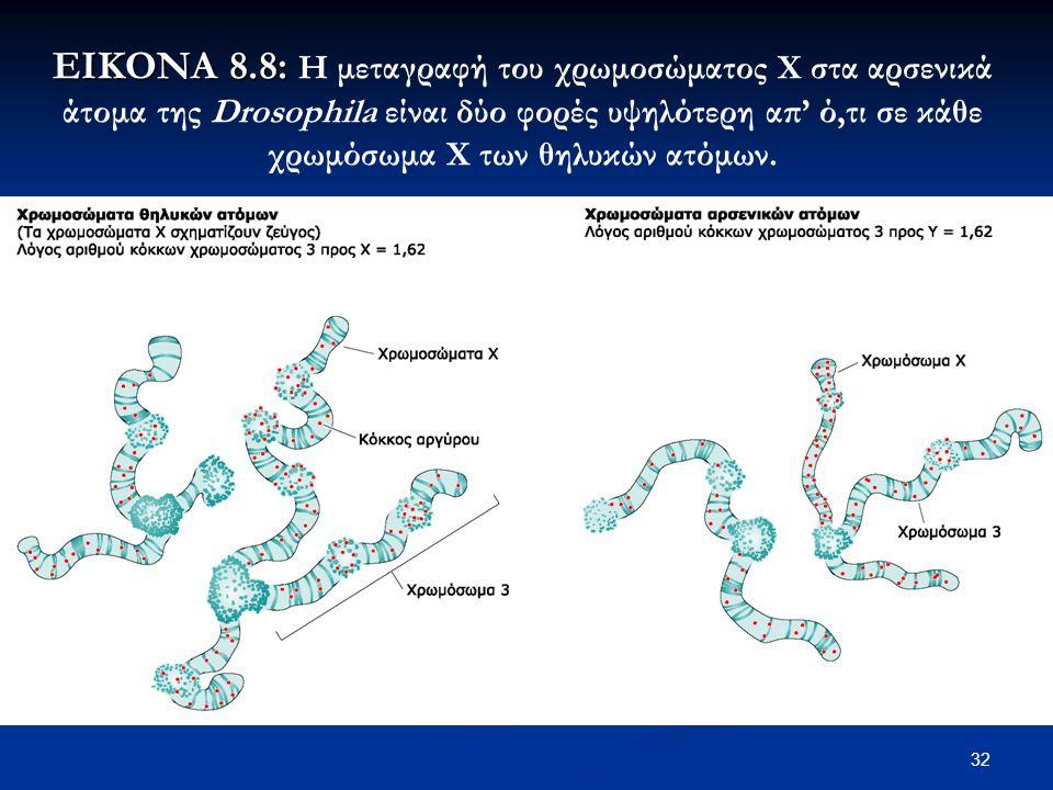 ΕΙΚΟΝΑ 8.8: Η μεταγραφή του χρωμοσώματος Χ στα αρσενικά άτομα της Drosophila είναι δύο φορές υψηλότερη απ' ό,τι σε κάθε χρωμόσωμα Χ των θηλυκών ατόμων.