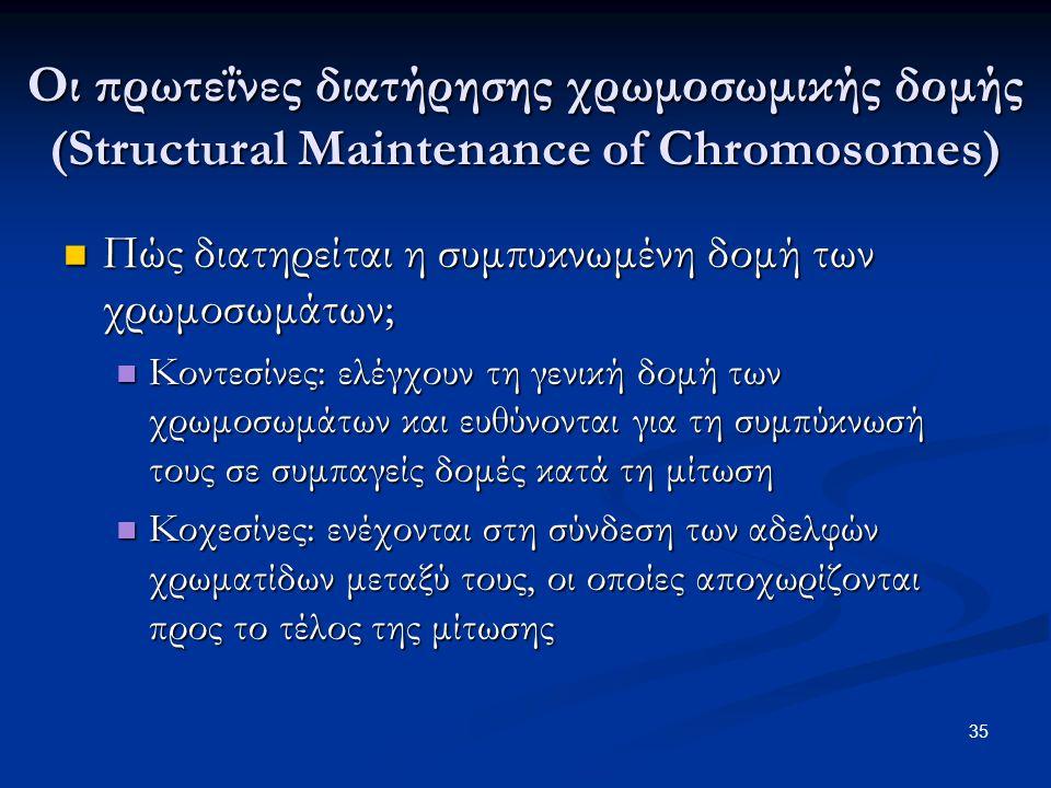 Οι πρωτεΐνες διατήρησης χρωμοσωμικής δομής (Structural Maintenance of Chromosomes)