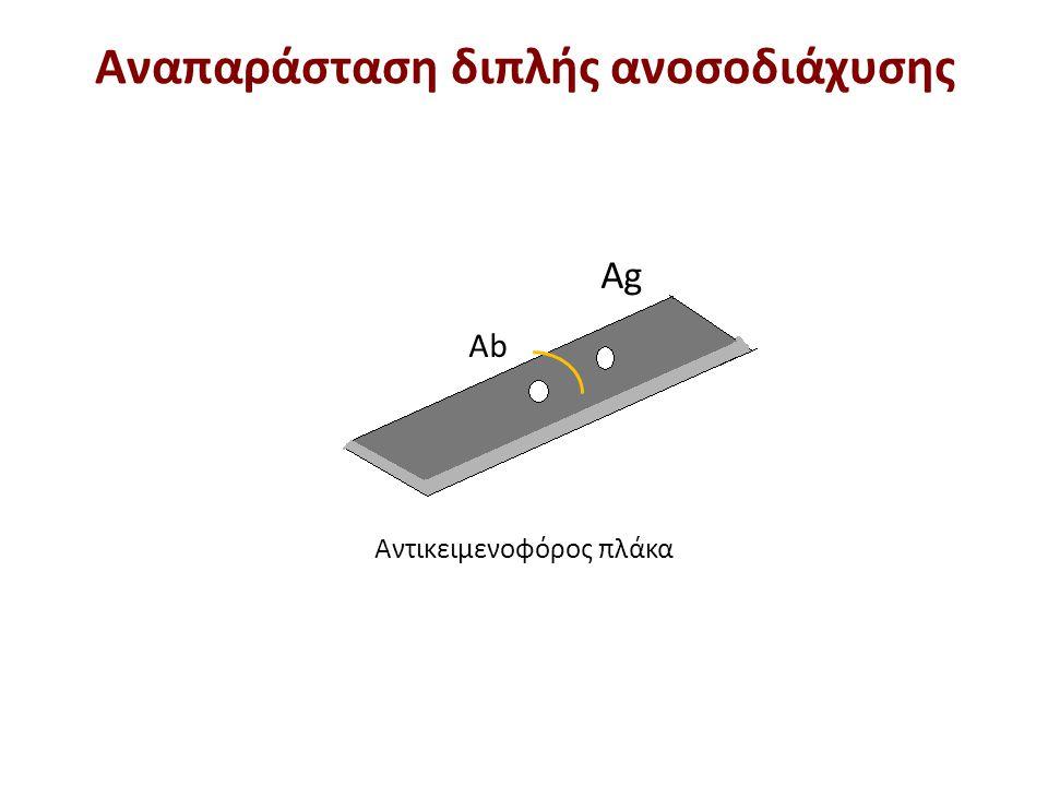 Το αντίσωμα είναι ειδικό έναντι του αντιγόνου Α και Β
