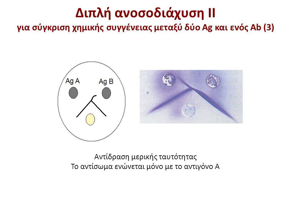 Διπλή ανοσοδιάχυση ΙΙ Ημιποσοτικός προσδιορισμός (1)
