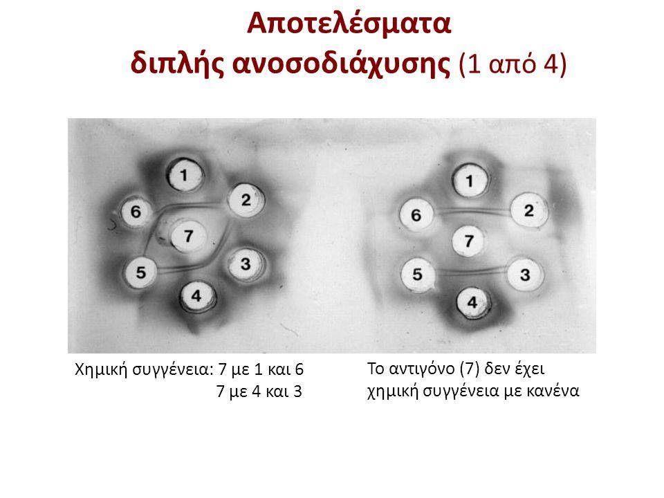 Αποτελέσματα διπλής ανοσοδιάχυσης (2 από 4)