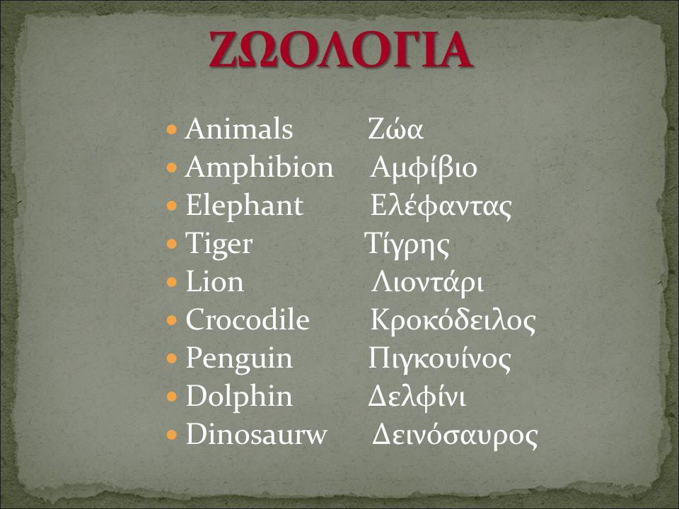 ΖΩΟΛΟΓΙΑ Animals Ζώα Amphibion Αμφίβιο Elephant Ελέφαντας Tiger Τίγρης