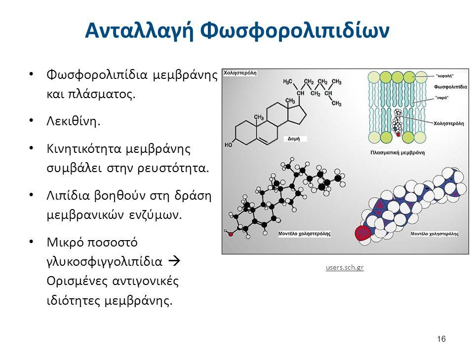 Πρωτεΐνες της Μεμβράνης