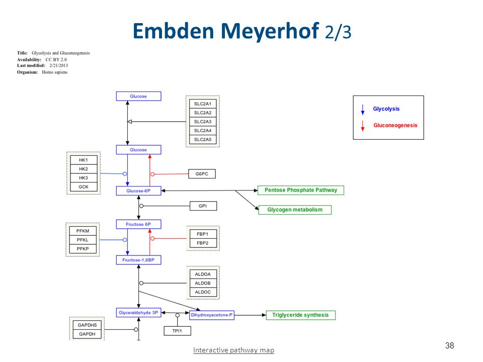Embden Meyerhof 3/3 Interactive pathway map