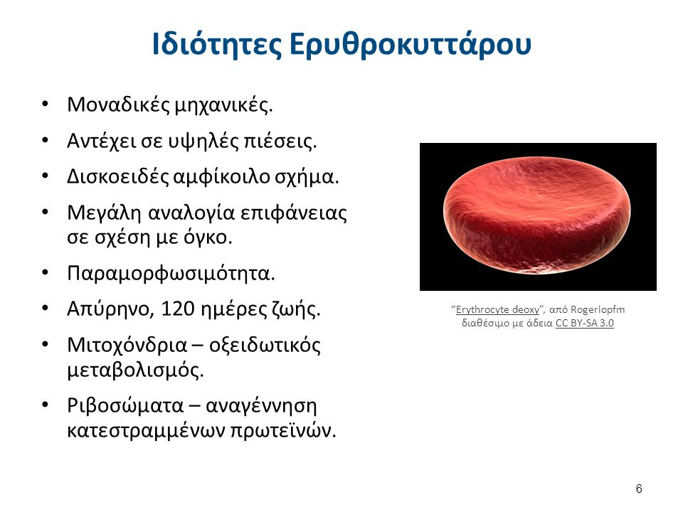 Ερυθροκύτταρα στα Αγγεία