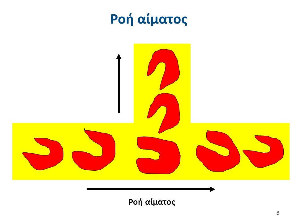 Πώς επιβιώνει το Ερυθροκύτταρο;