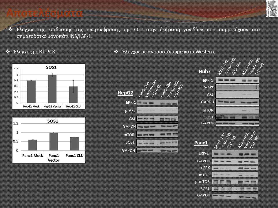 Αποτελέσματα Έλεγχος της επίδρασης της υπερέκφρασης της CLU στην έκφραση γονιδίων που συμμετέχουν στο σηματοδοτκό μονοπάτι INS/IGF-1.