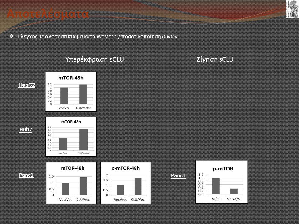 Αποτελέσματα Υπερέκφραση sCLU Σίγηση sCLU