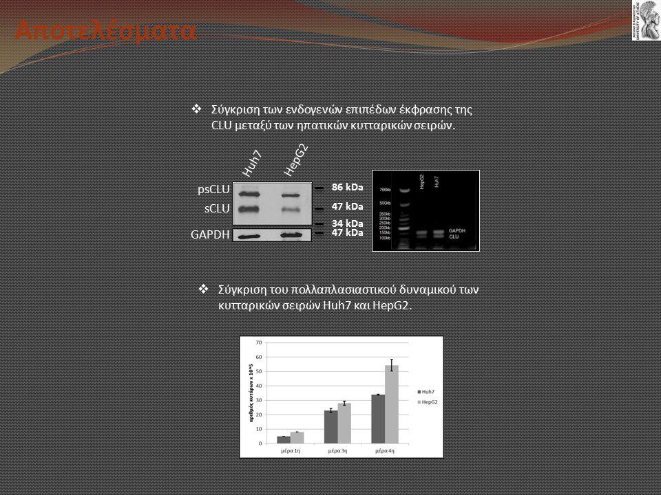 Αποτελέσματα Σύγκριση των ενδογενών επιπέδων έκφρασης της CLU μεταξύ των ηπατικών κυτταρικών σειρών.
