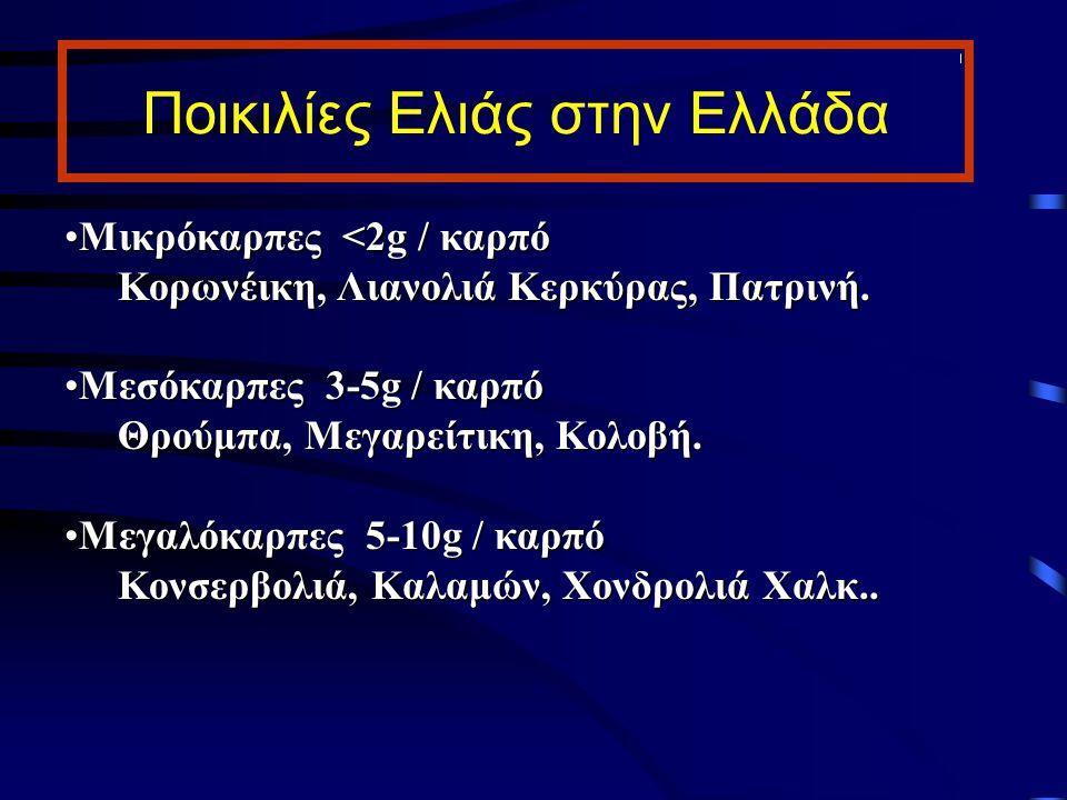 Ποικιλίες Ελιάς στην Ελλάδα