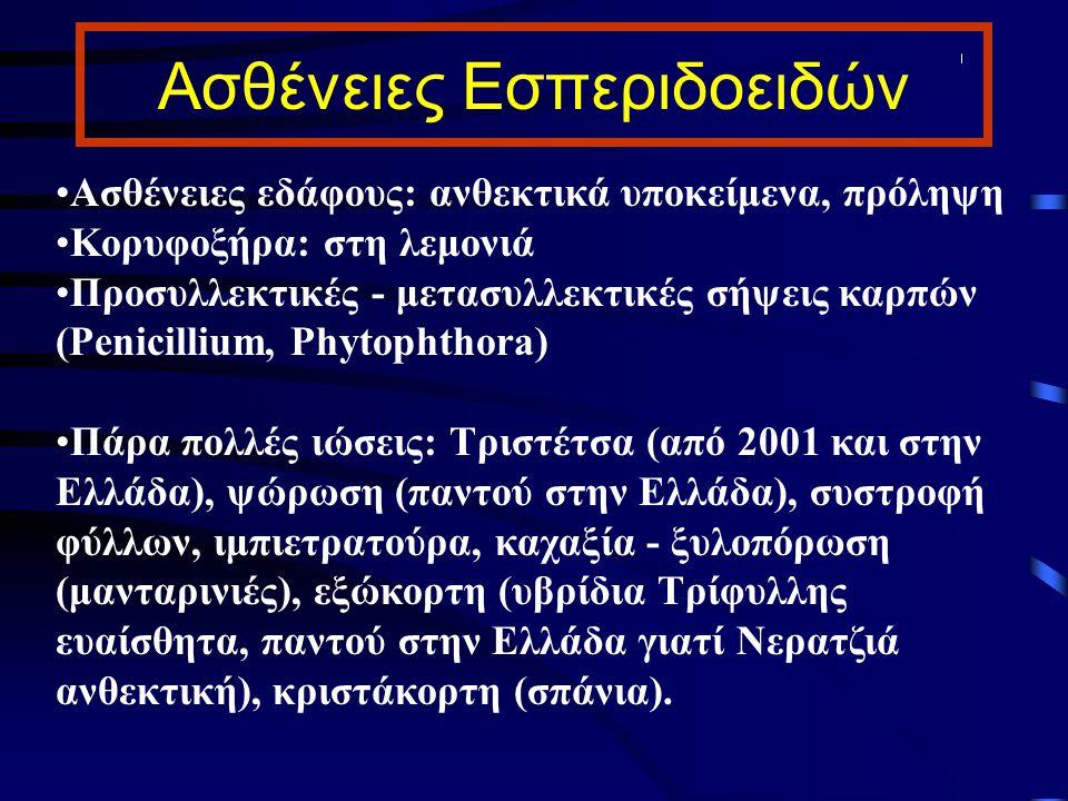 Ασθένειες Εσπεριδοειδών