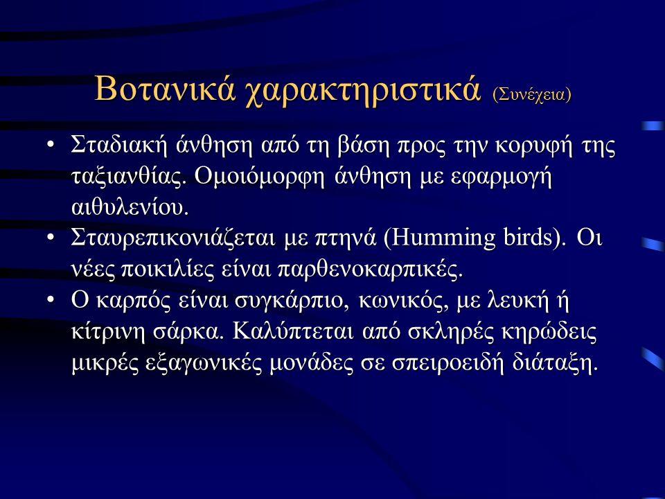 Βοτανικά χαρακτηριστικά (Συνέχεια)