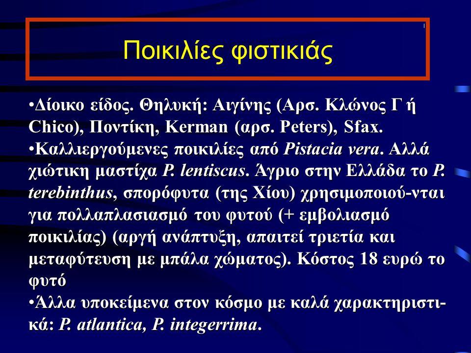 Ποικιλίες φιστικιάς Δίοικο είδος. Θηλυκή: Αιγίνης (Αρσ. Κλώνος Γ ή Chico), Ποντίκη, Kerman (αρσ. Peters), Sfax.