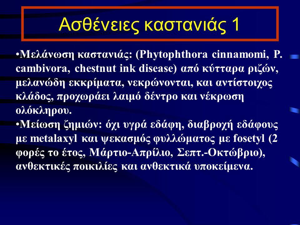 Ασθένειες καστανιάς 1