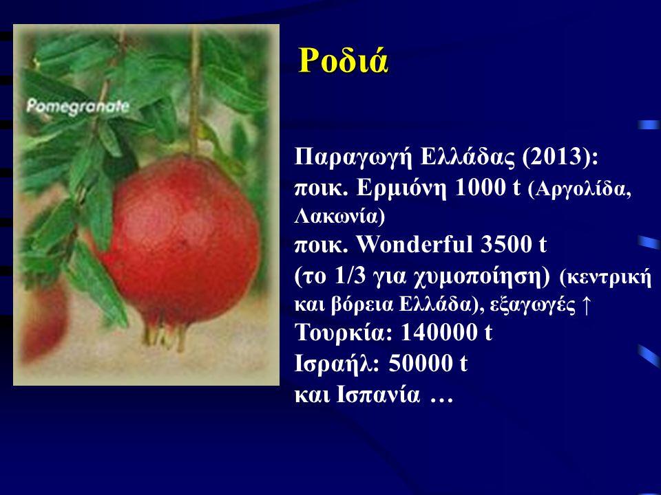 Ροδιά Παραγωγή Ελλάδας (2013): ποικ. Ερμιόνη 1000 t (Αργολίδα,