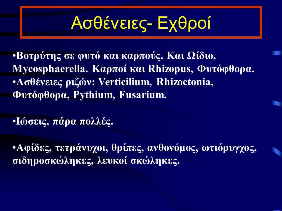 Ασθένειες- Εχθροί Βοτρύτης σε φυτό και καρπούς. Και Ωίδιο, Mycosphaerella. Καρποί και Rhizopus, Φυτόφθορα.