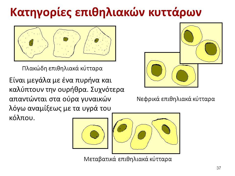 Πλακώδη επιθηλιακά κύτταρα