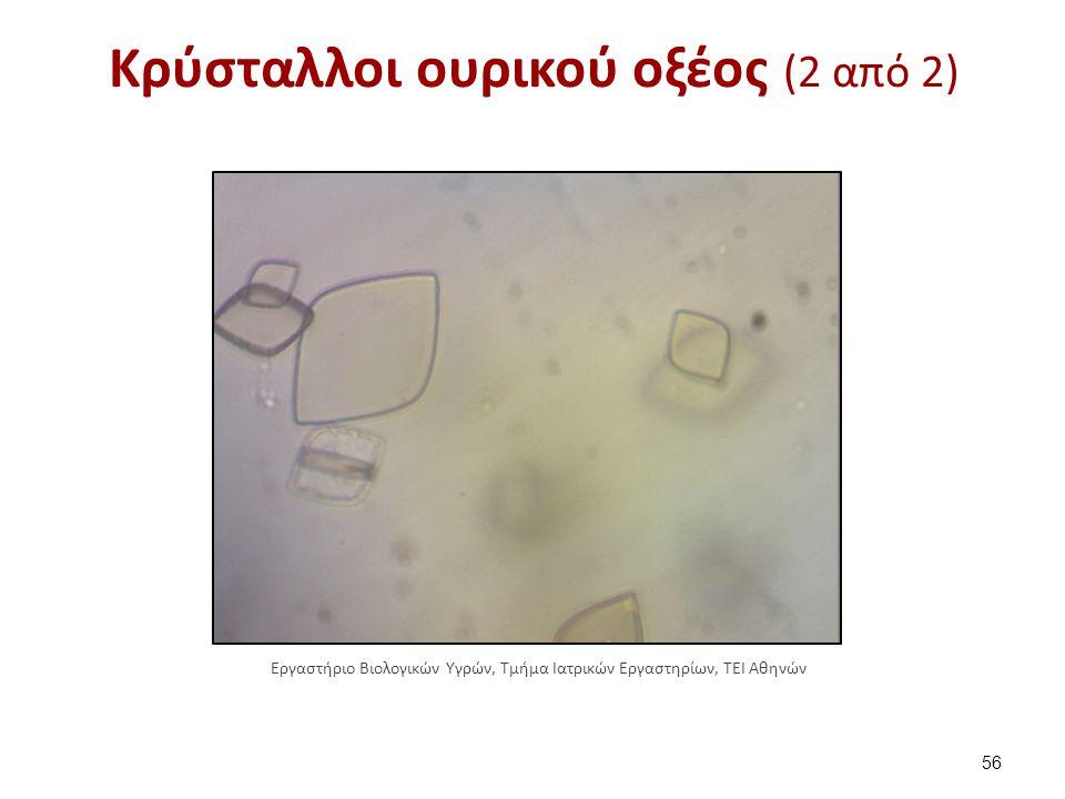 Κρύσταλλοι κυστίνης (1 από 2)
