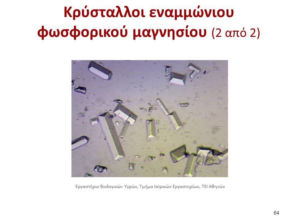 Κρύσταλλοι φωσφορικού διασβεστίου (1 από 2)