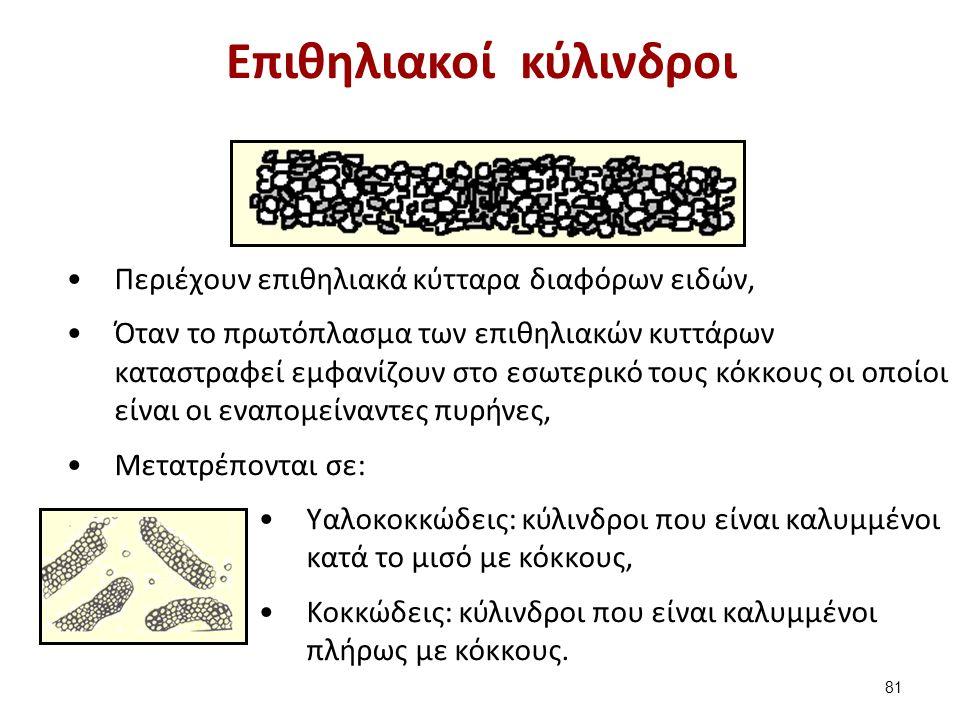 Η εξέλιξη των επιθηλιακών κυττάρων (1 από 2)