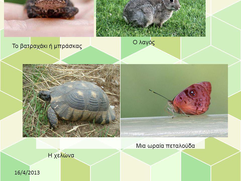 Το βατραχάκι ή μπράσκας