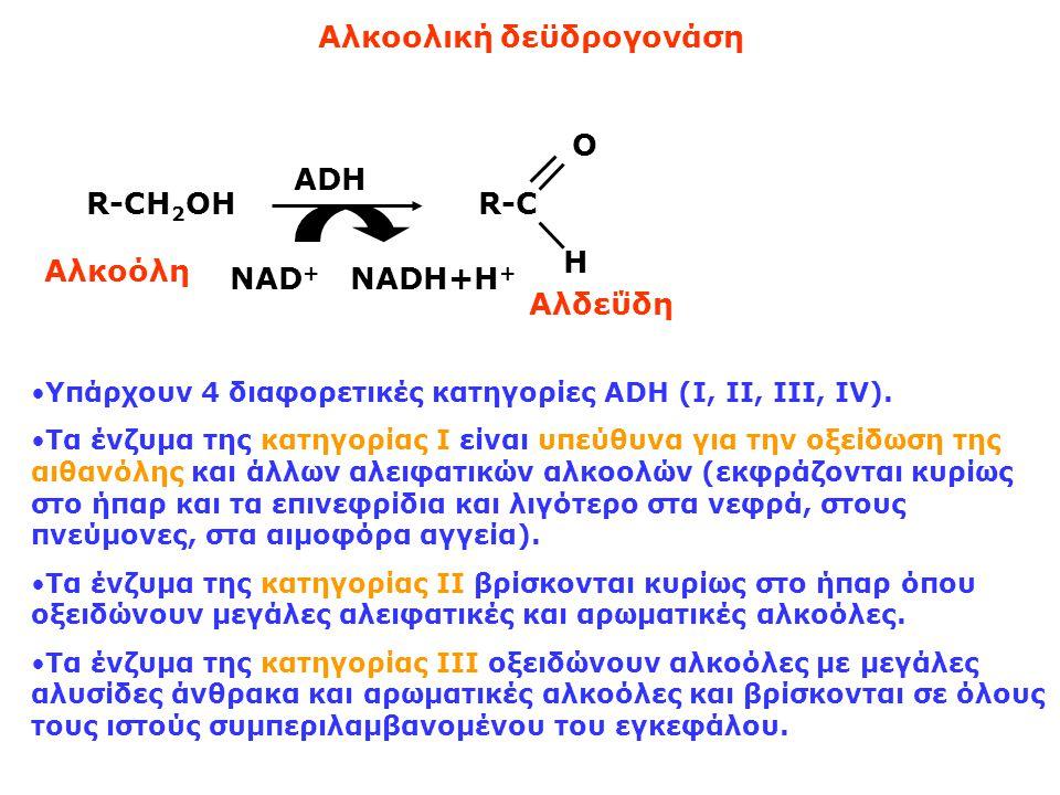 Aλκοολική δεϋδρογονάση