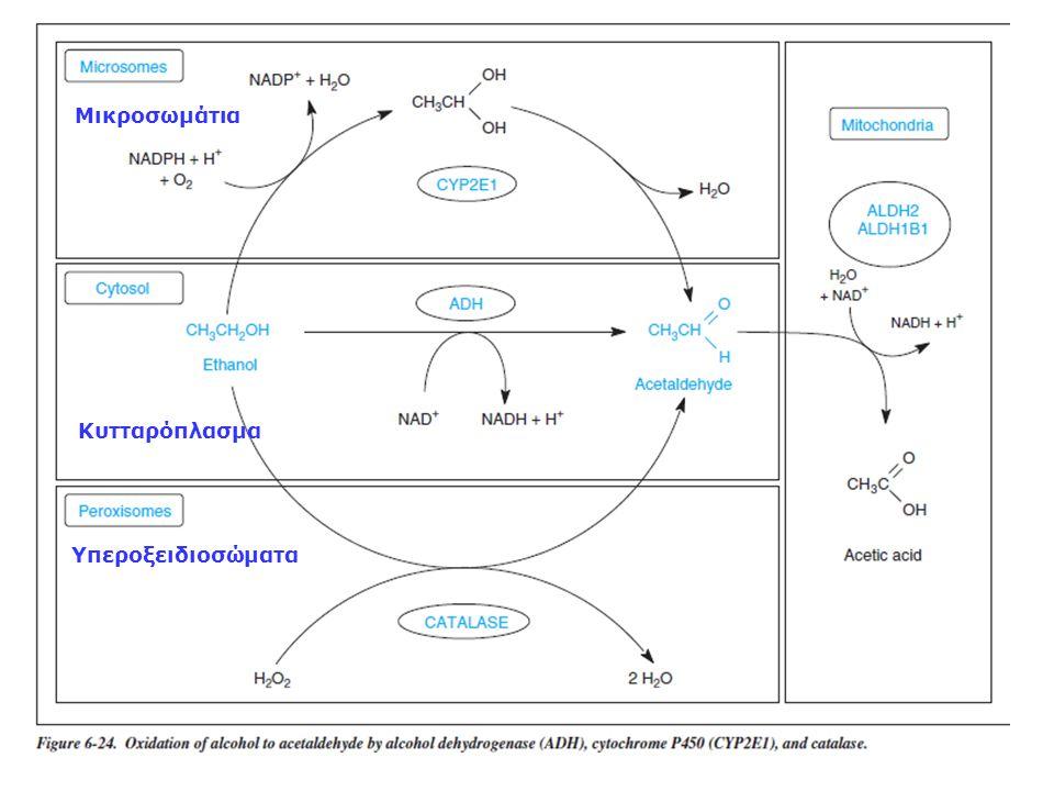 Μικροσωμάτια Κυτταρόπλασμα Υπεροξειδιοσώματα