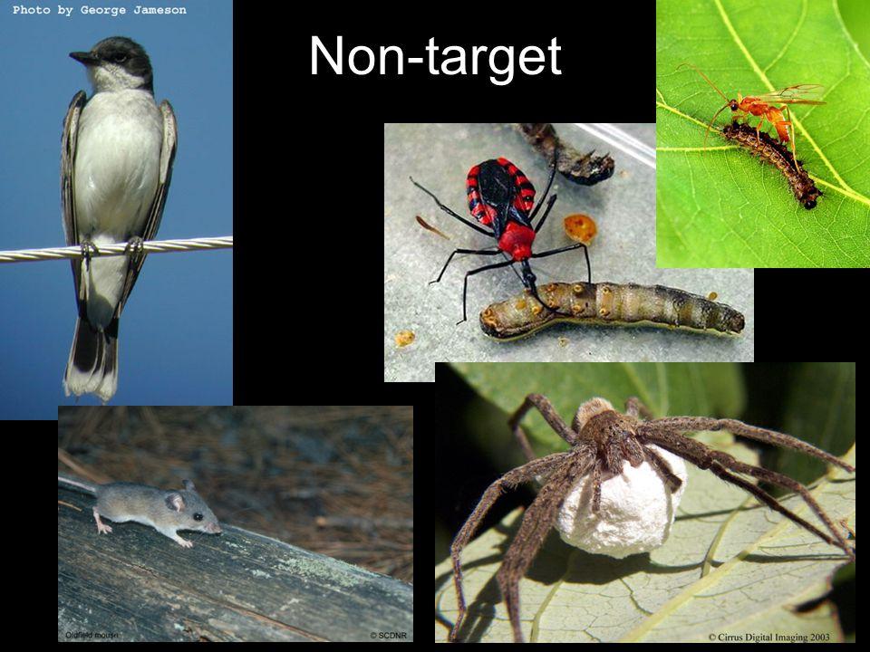 Non-target