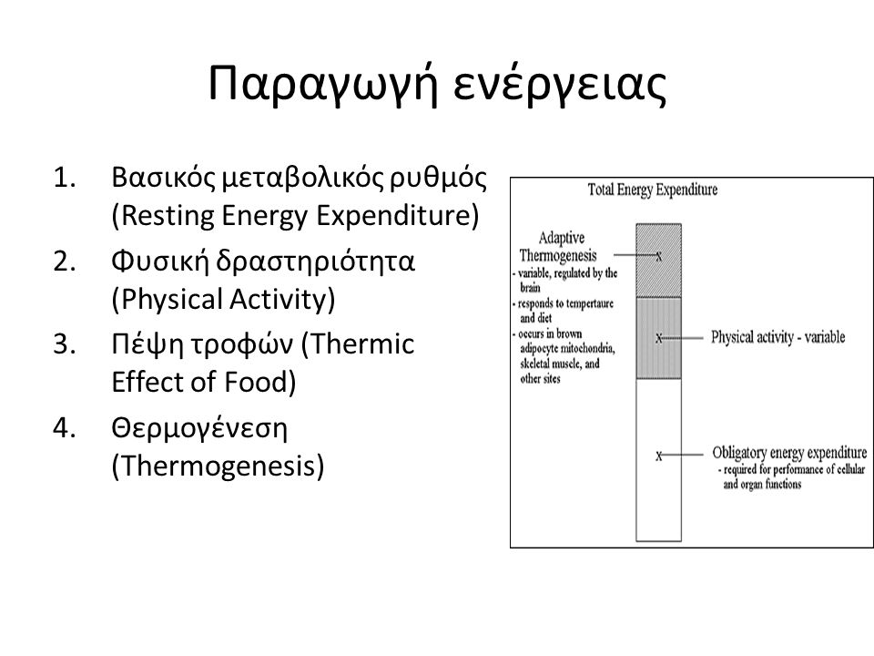 Παραγωγή ενέργειας Βασικός μεταβολικός ρυθμός (Resting Energy Expenditure) Φυσική δραστηριότητα (Physical Activity)