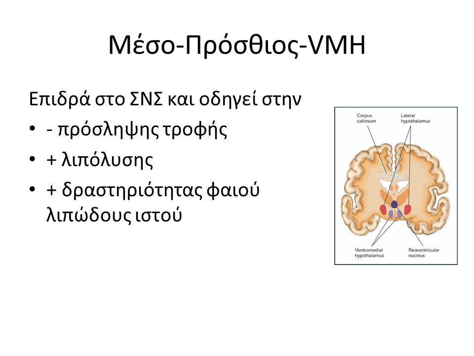 Μέσο-Πρόσθιος-VMH Επιδρά στο ΣΝΣ και οδηγεί στην - πρόσληψης τροφής