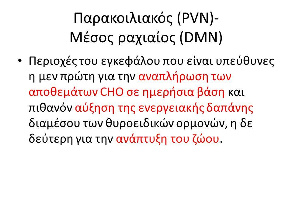 Παρακοιλιακός (PVN)- Μέσος ραχιαίος (DMN)
