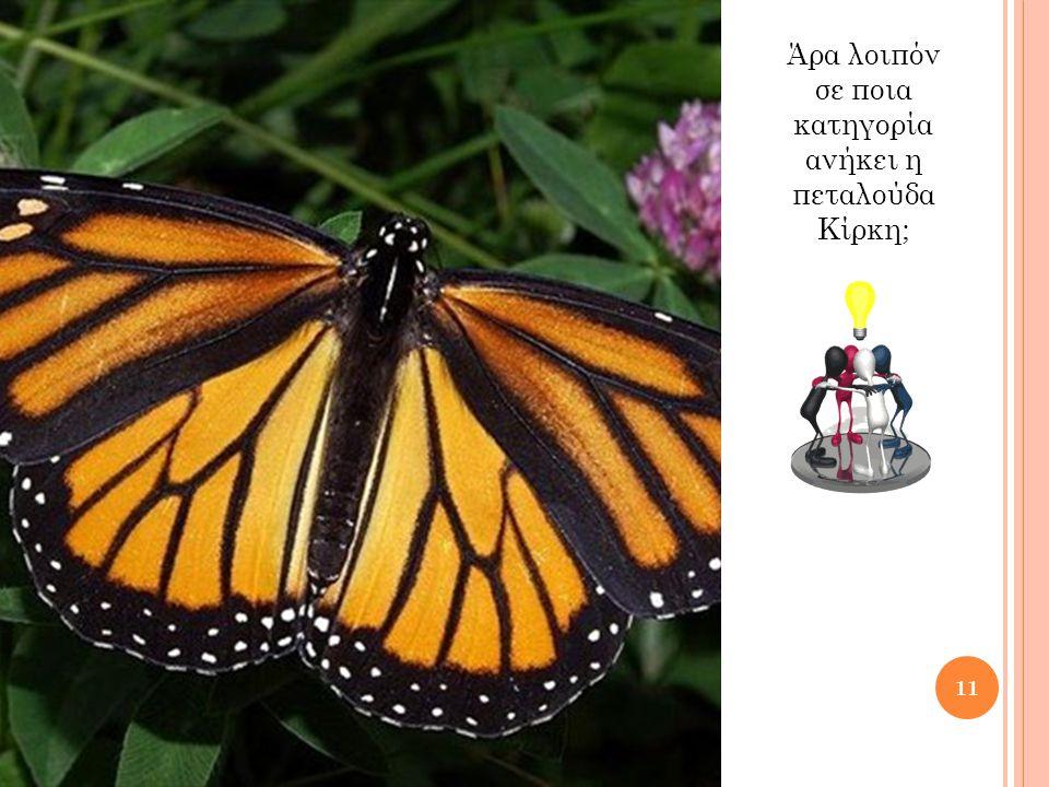 Άρα λοιπόν σε ποια κατηγορία ανήκει η πεταλούδα Κίρκη;