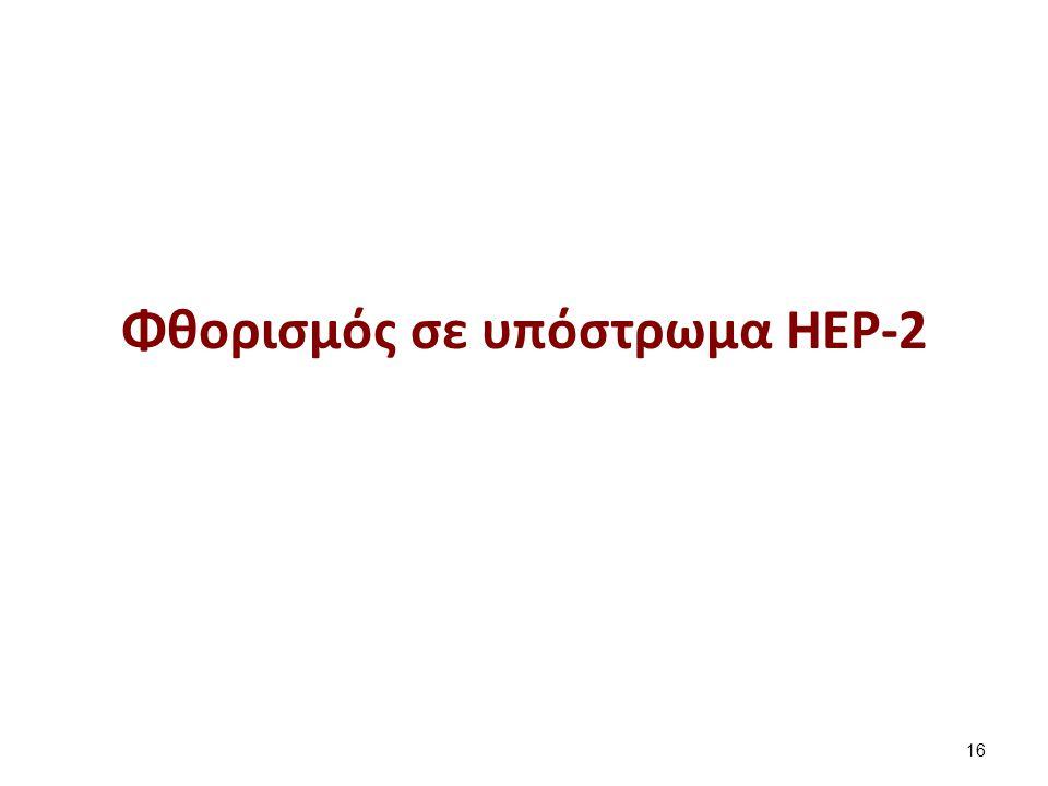 Αντιγόνα σε Hep-2 για ΑΝΑ