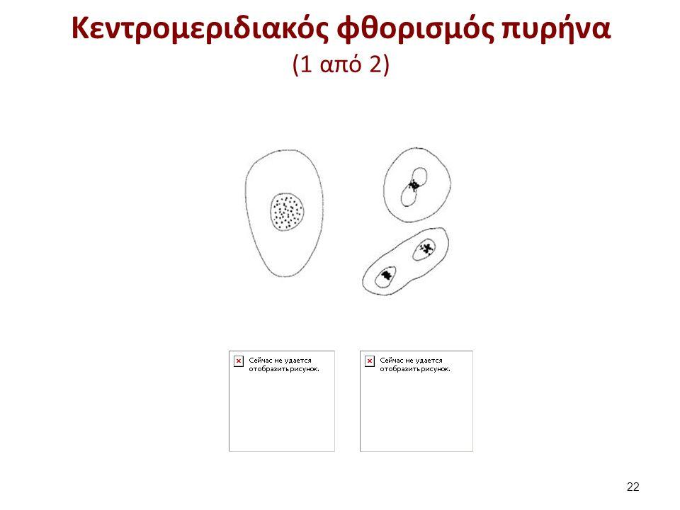 Κεντρομεριδιακός φθορισμός πυρήνα (2 από 2)