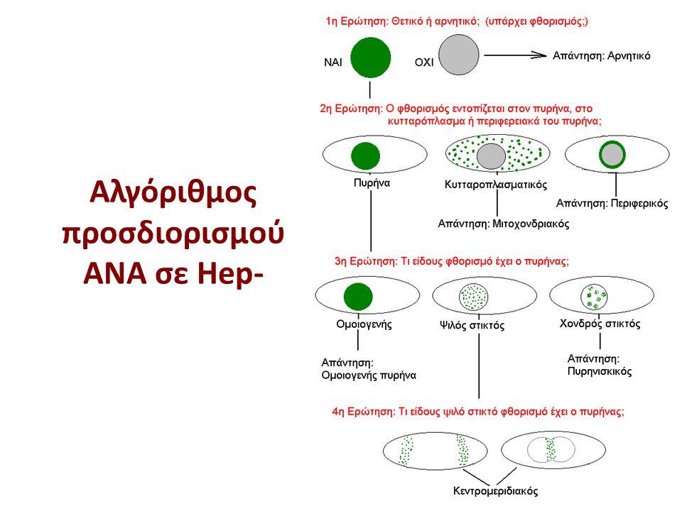 Αντιμιτοχονδριακά αντισώματα (ΑΜΑ) σε υπόστρωμα Hep-2