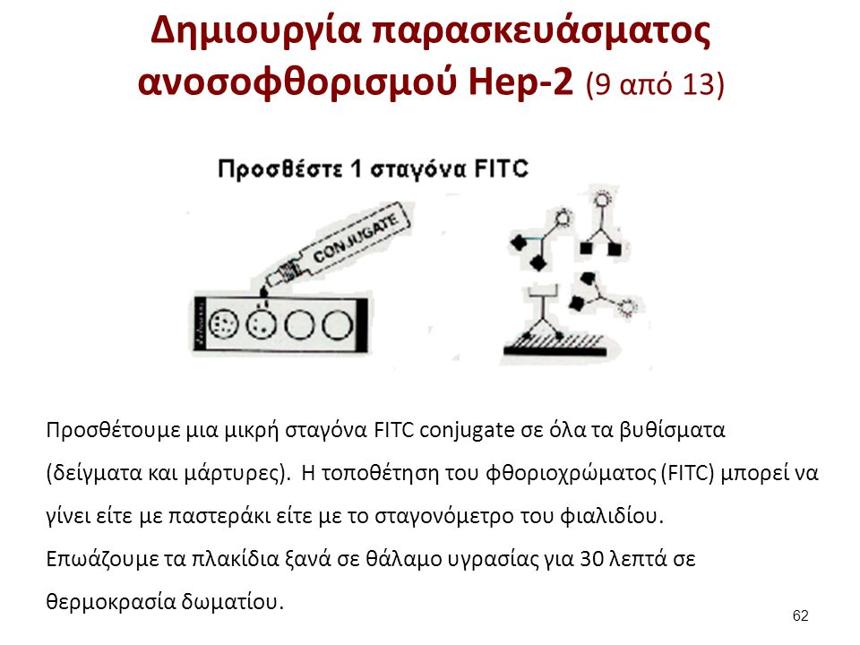 Δημιουργία παρασκευάσματος ανοσοφθορισμού Hep-2 (10 από 13)