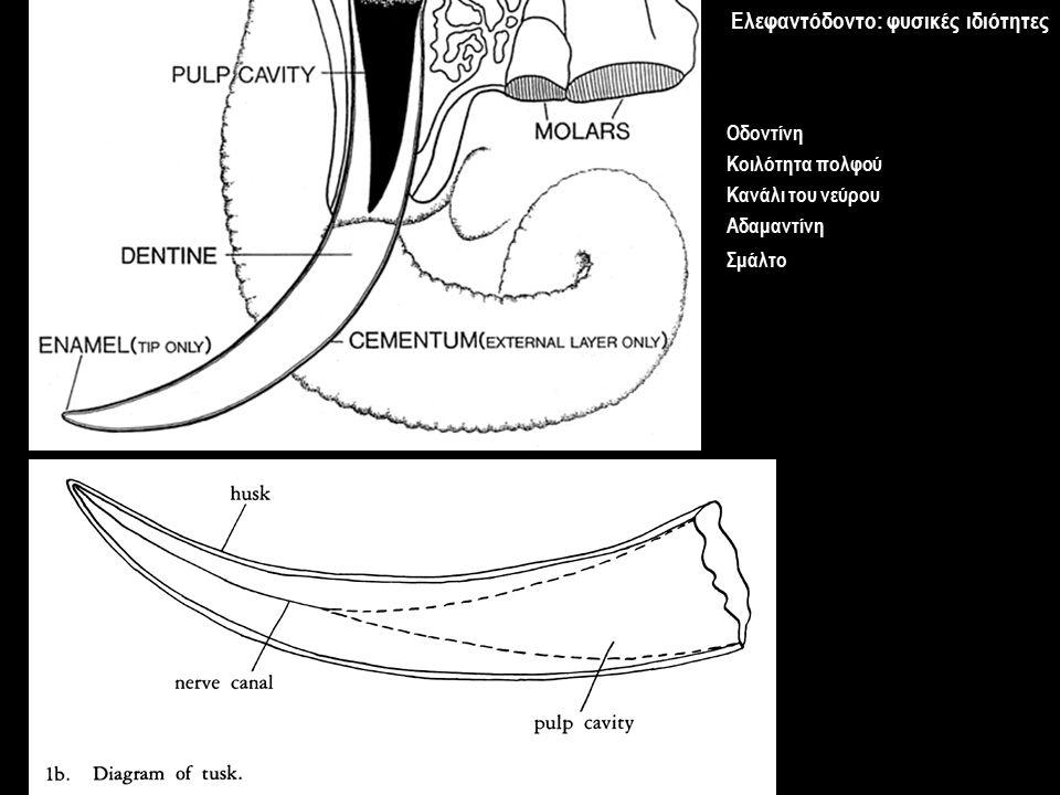 Ελεφαντόδοντο: φυσικές ιδιότητες