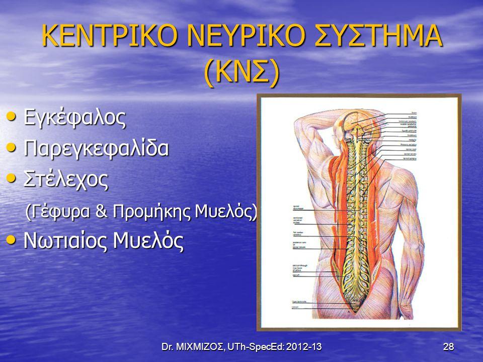 ΚΕΝΤΡΙΚΟ ΝΕΥΡΙΚΟ ΣΥΣΤΗΜΑ (ΚΝΣ)
