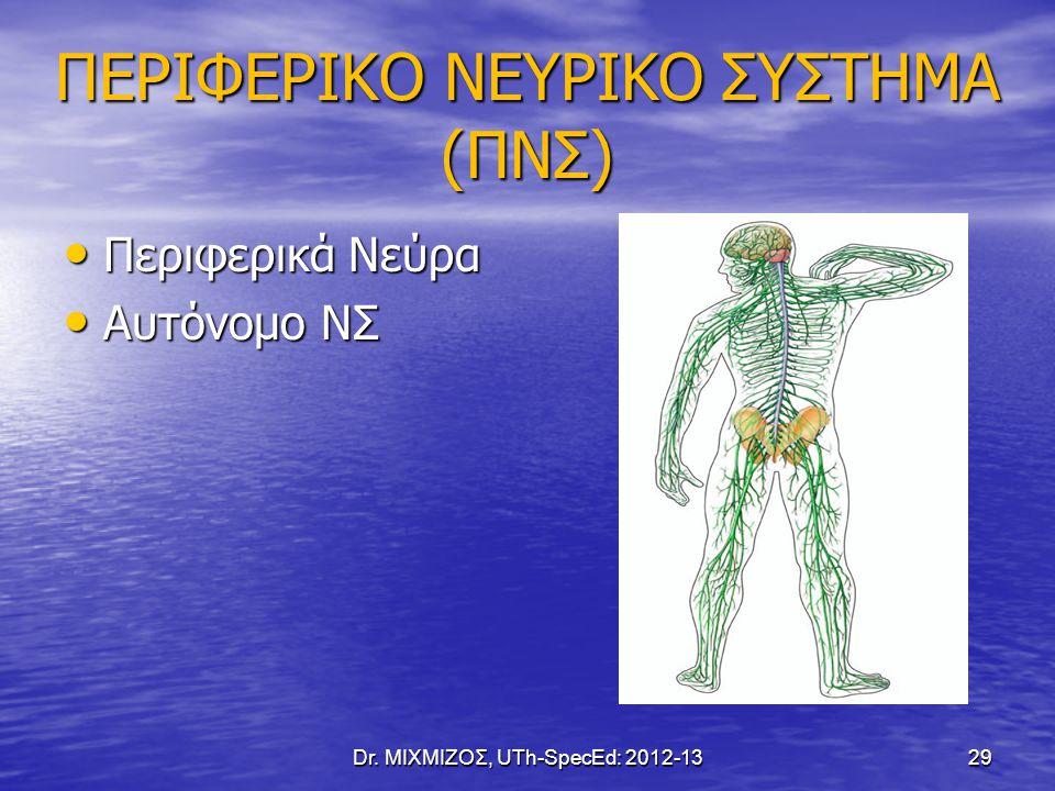 ΠΕΡΙΦΕΡΙΚΟ ΝΕΥΡΙΚΟ ΣΥΣΤΗΜΑ (ΠΝΣ)