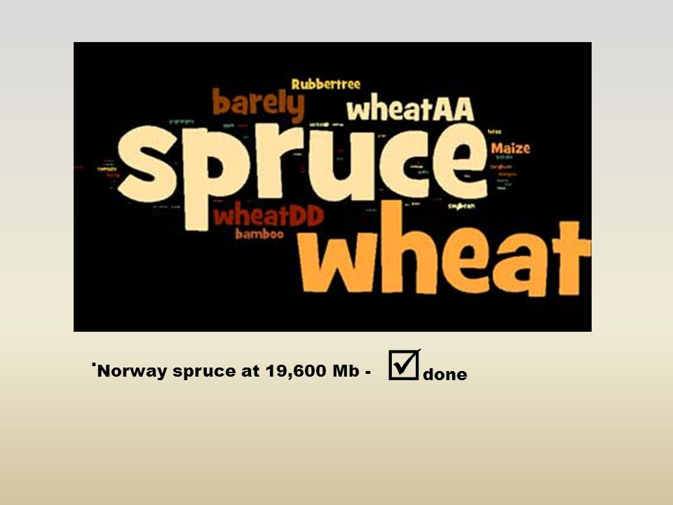 done . Norway spruce at 19,600 Mb -