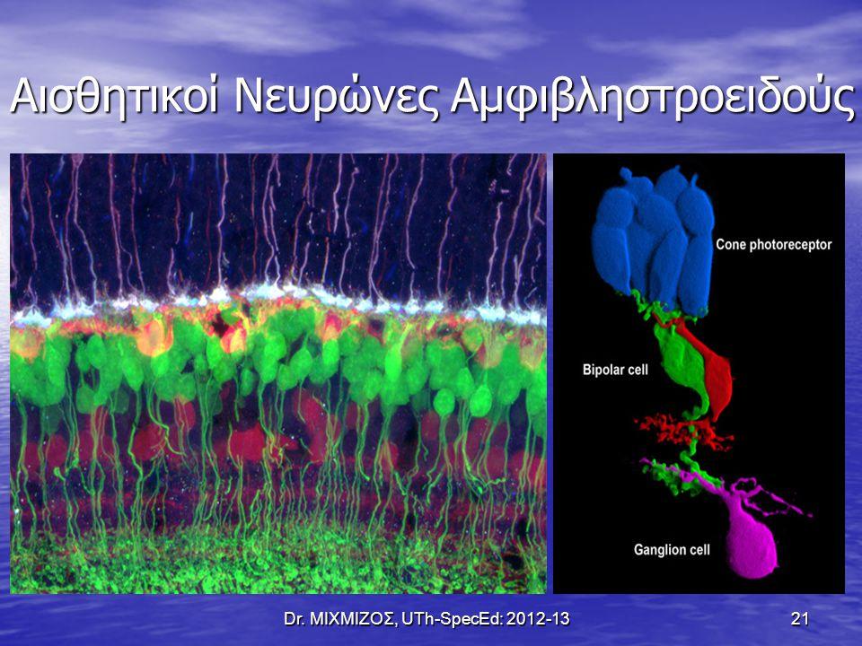 Αισθητικοί Νευρώνες Αμφιβληστροειδούς