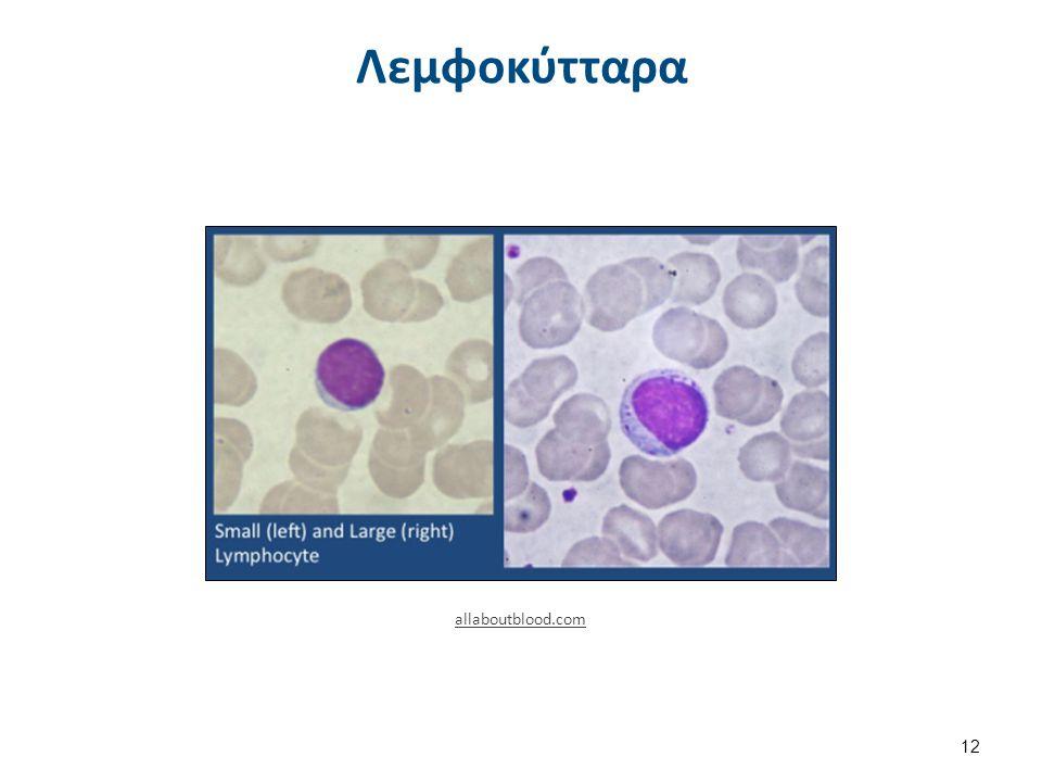 Blausen 0649 Monocyte , από BruceBlaus διαθέσιμο με άδεια CC BY 3.0