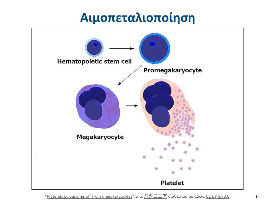 Αιμοπετάλια Red White Blood cells , από E rulez διαθέσιμο ως κοινό κτήμα.