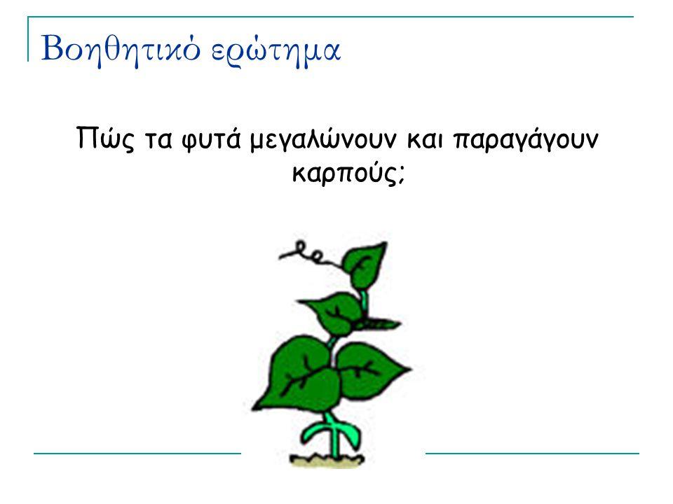 Πώς τα φυτά μεγαλώνουν και παραγάγουν καρπούς;