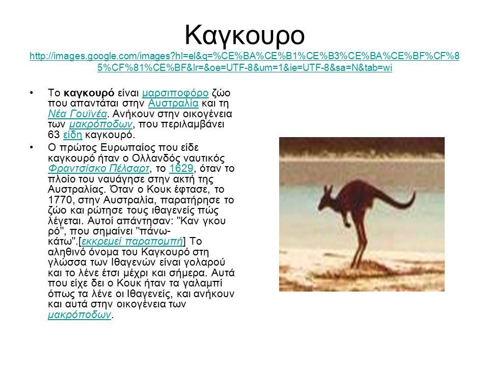 Καγκουρο http://images. google. com/images