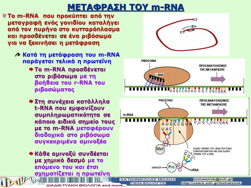 ΜΕΤΑΦΡΑΣΗ ΤΟΥ m-RNA